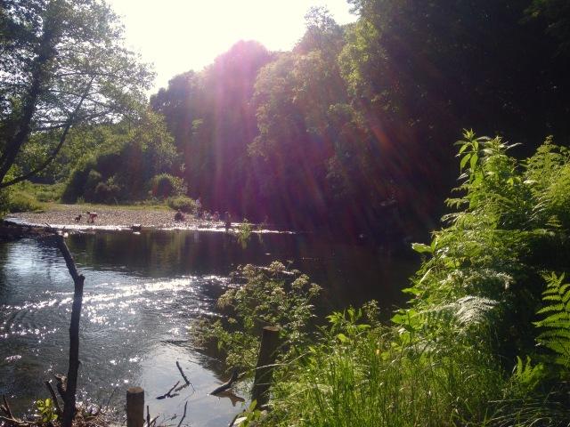RiverSwim1